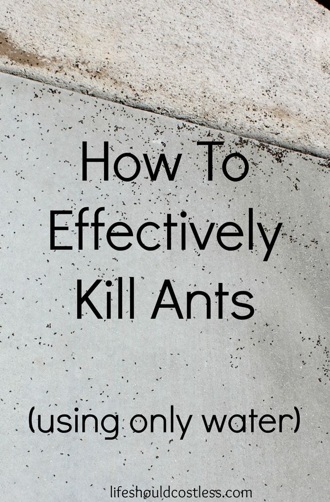 https://lifeshouldcostless.com/2015/06/how-to-effectively-kill-ants-using-only.html