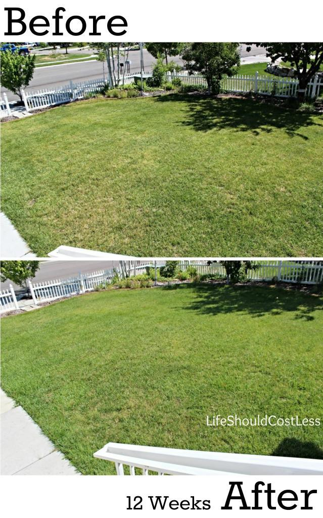 Our Results, Before And After Power Raking Our Lawn