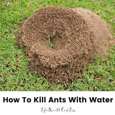 How To Kill Ants Using Only Water