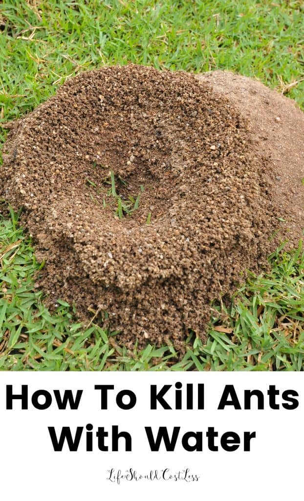 How To Kill Ants Using Only Water - Life Should Cost Less