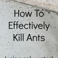 How To Effectively Kill Ants (using only water)