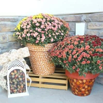Autumn Print Potted Mums
