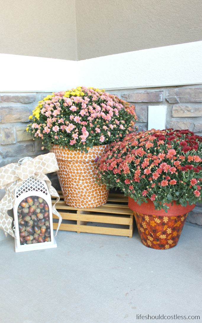 Autumn Print Potted Mums Life Should Cost Less