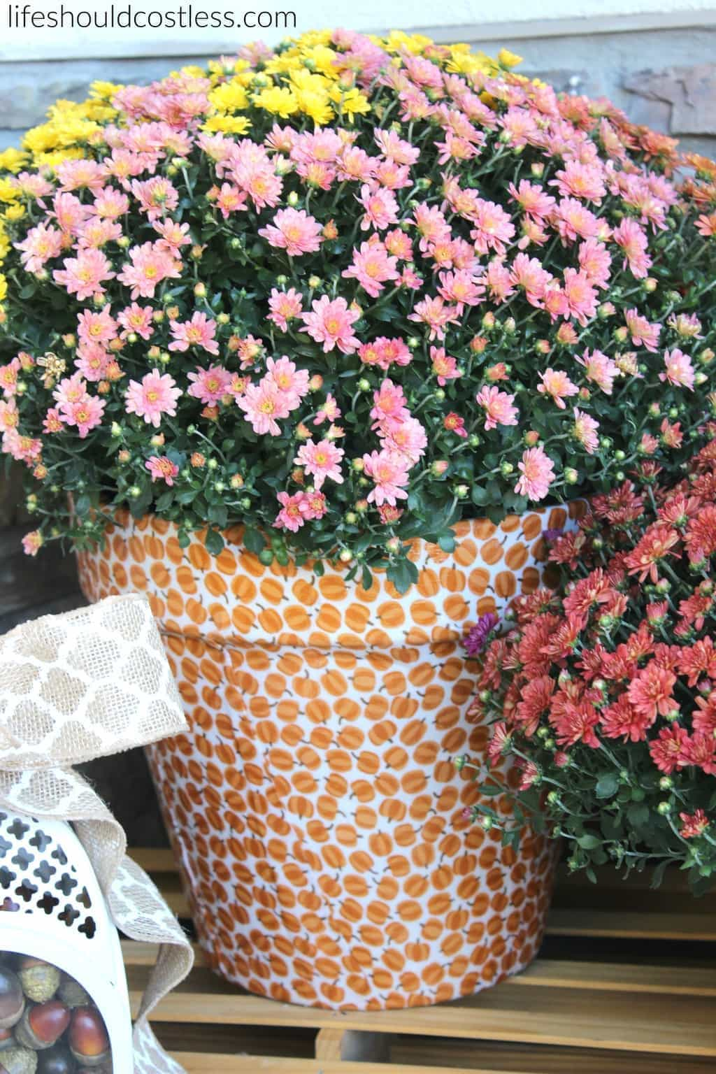 autumn-print-potted-mums