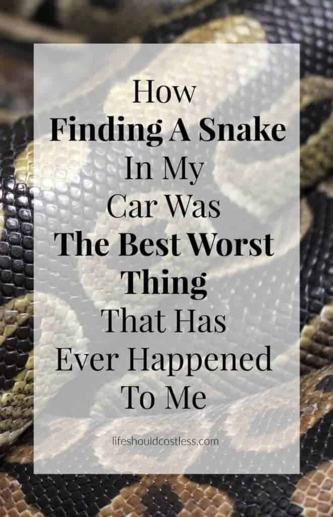 How Finding A Snake In My Car Was The Best Worst Thing That Has Ever Happened To Me