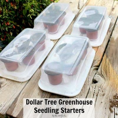 Dollar Tree Greenhouse Seedling Starters