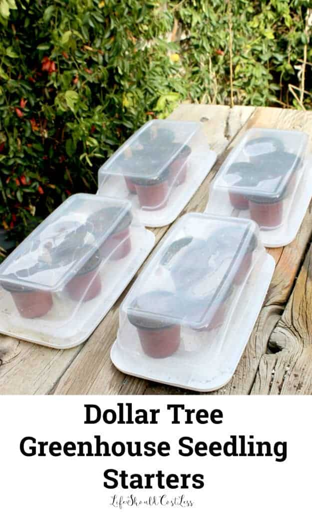 Dollar Tree Greenhouse Seedling Starters. Fun and cheap idea to get kids excited about gardening. lifeshouldcostless.com