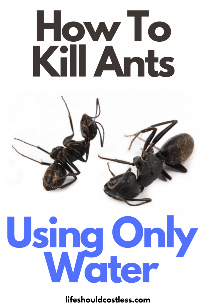 Easy way to kill ants with water. Can water kill ants? Yes it can! lifeshouldcostless.com