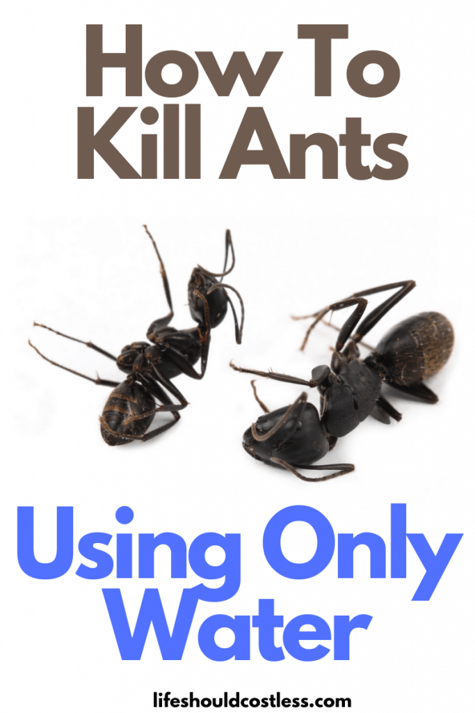 How to kill ants effectively outside in your yard. A safe and nontoxic home remedy to ant infestations. lifeshouldcostless.com