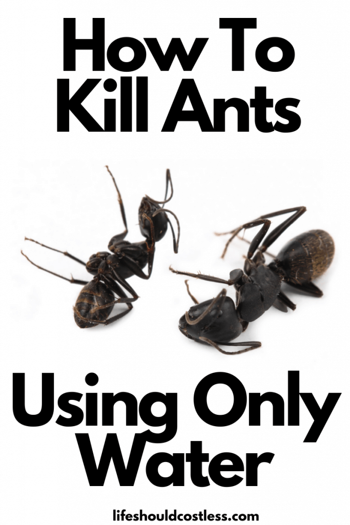 How To Kill Ants naturally with water. lifeshouldcostless.com