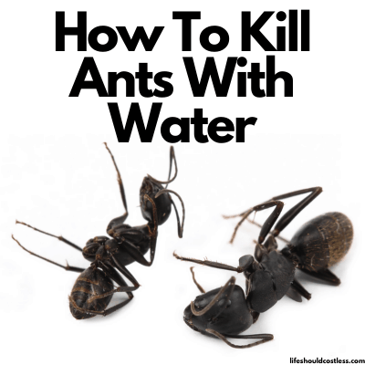 Does boiling water kill ants?