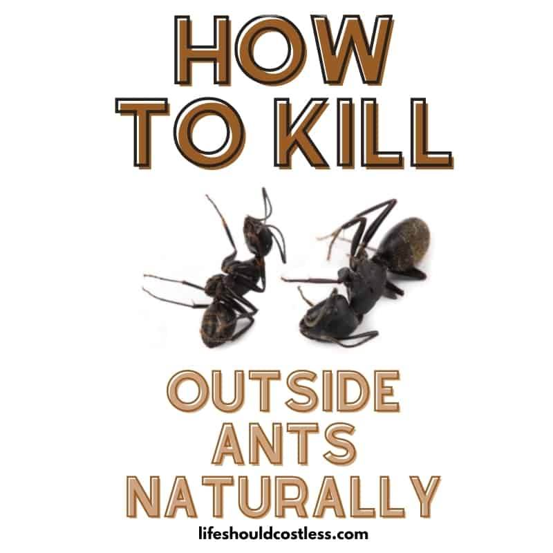 how to kill ant colonies in yard/outside.