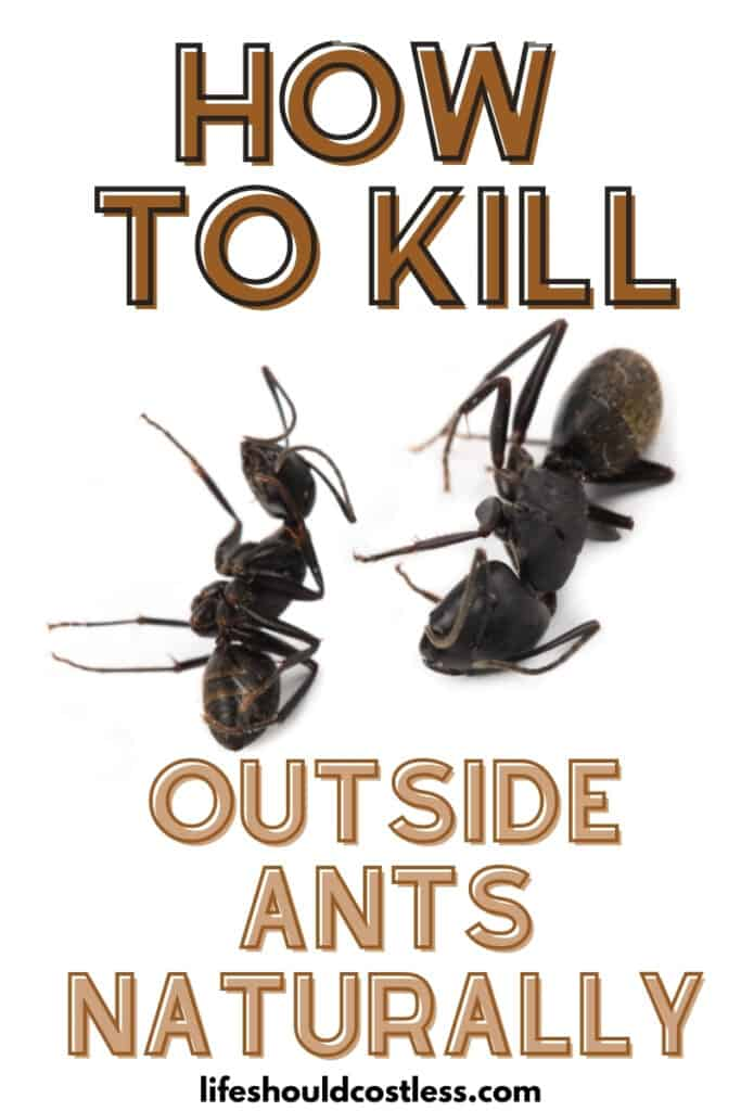 Does boiling water kill ants? Try this easy way to kill outside ants.