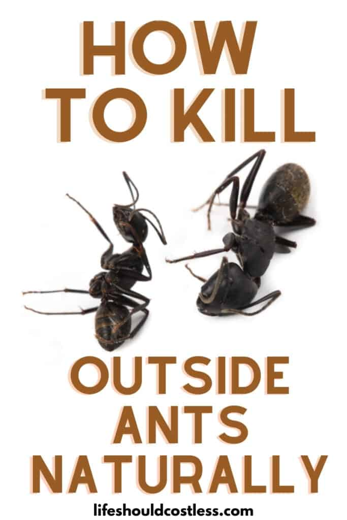 How to kill outside ants in your yard, the easy cheap home remedy.